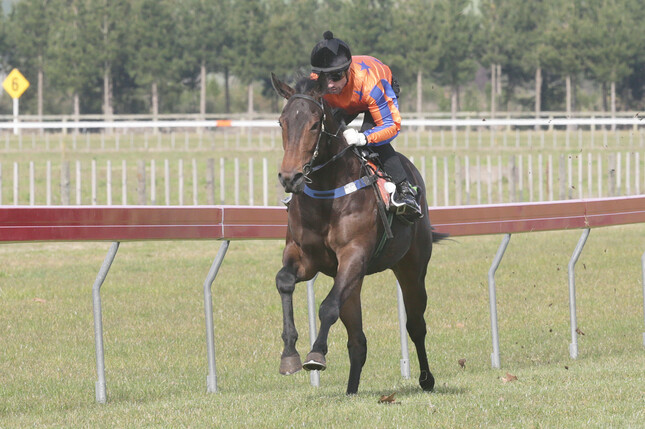 Cool Aza Beel winning his trial heat at Te Teko on Tuesday - Trish Dunell