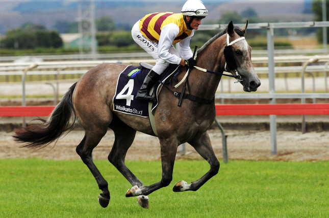 Aalaalune (pictured) and Mr Universe have transferred to Team Rogerson's Hamilton stables. - Trish Dunell