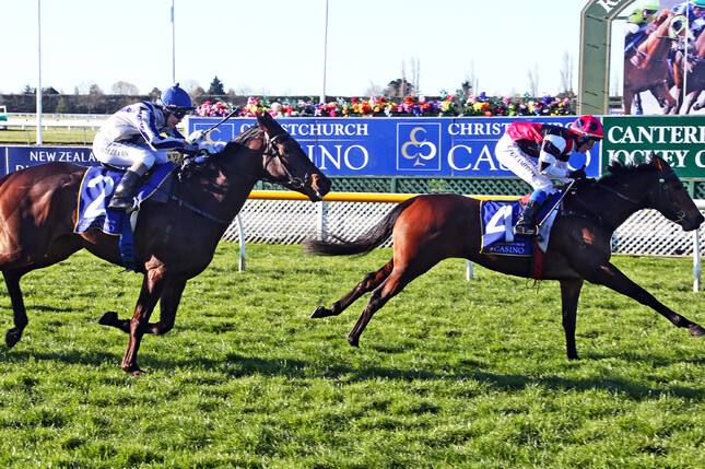Former Riverton galloper Flying Sardine will have her first start in Australia at Caulfield on Saturday. - Race Images South